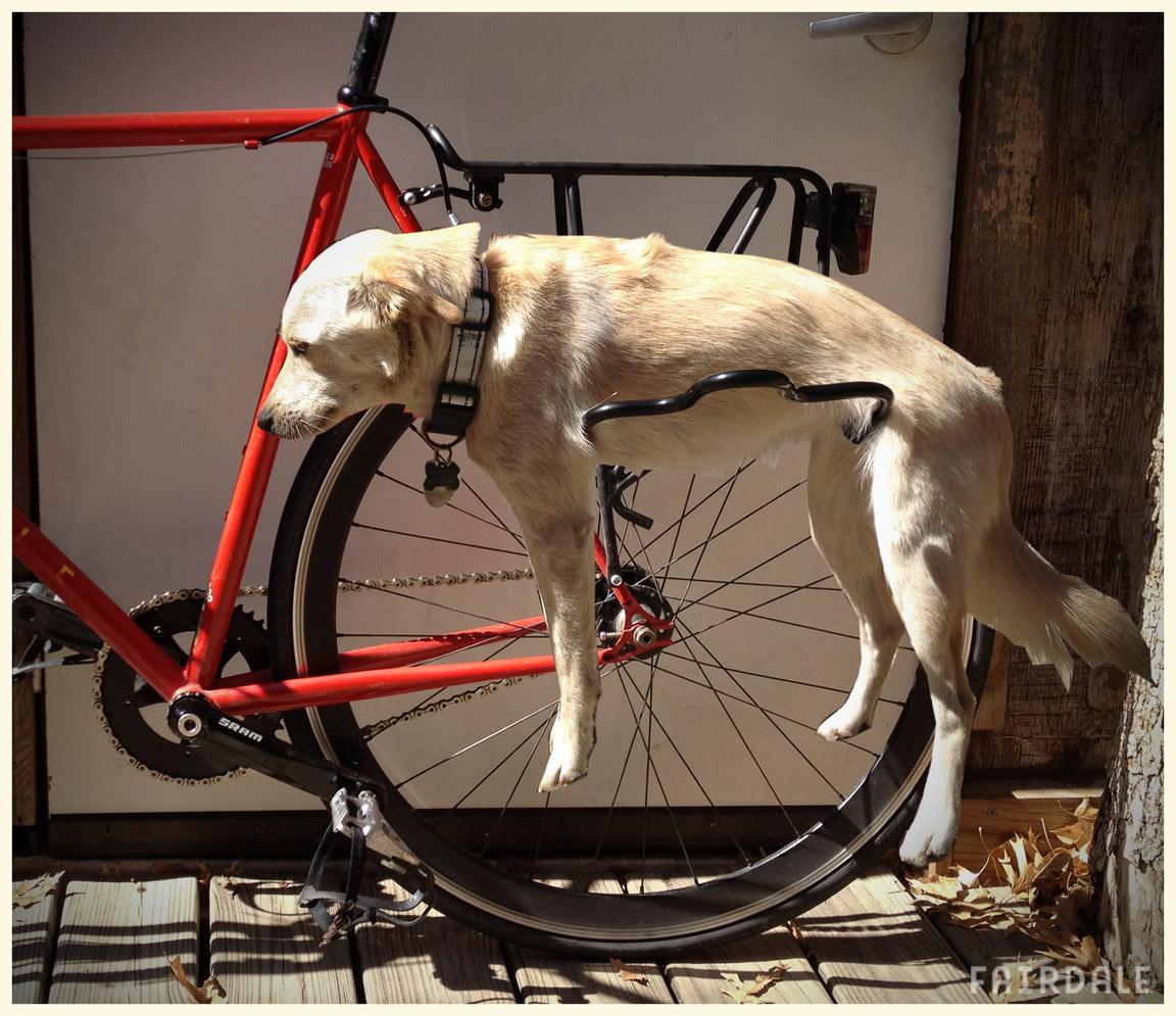 Седло от велосипеда в жопу 12 фотография