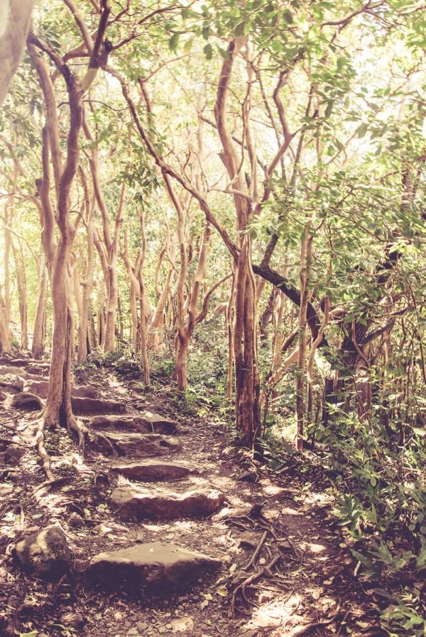 The trail and towards Waimoku falls