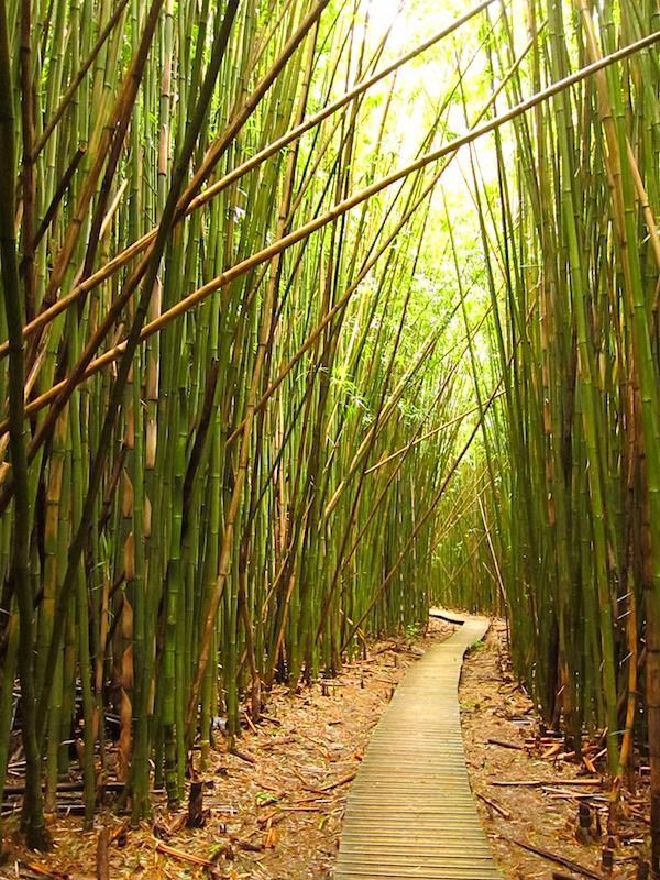 The path board-walked through bamboo
