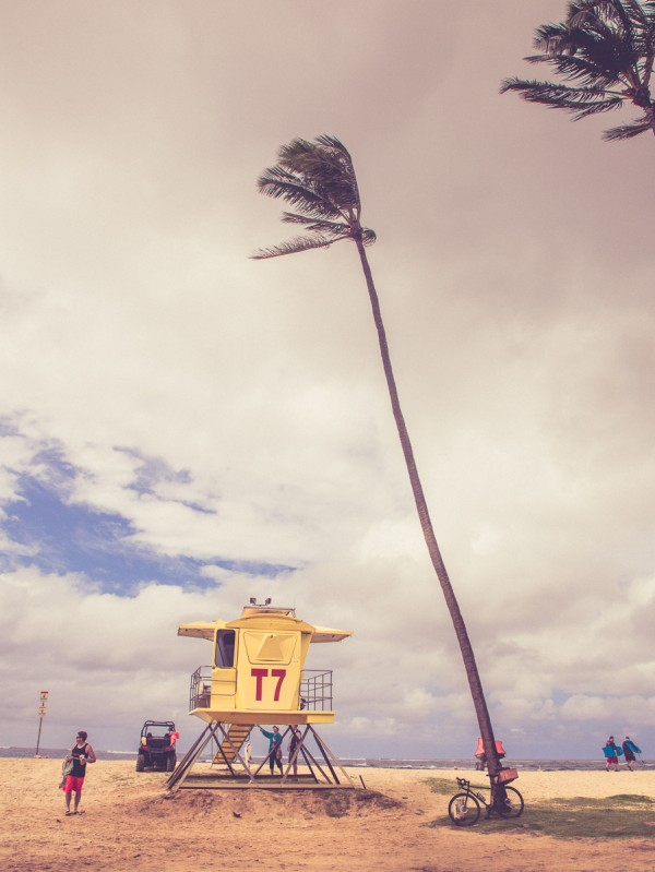 Don't hassle the Hoff.  Baldwin beach, and the idyllic palm you've been waiting for.