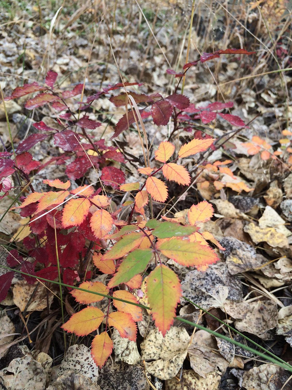 gradient_leaves