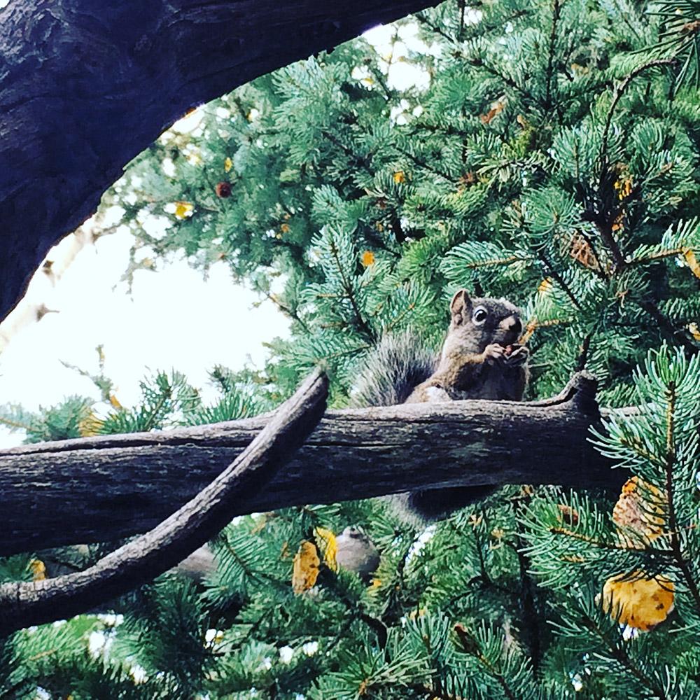 tinypants_squirrel