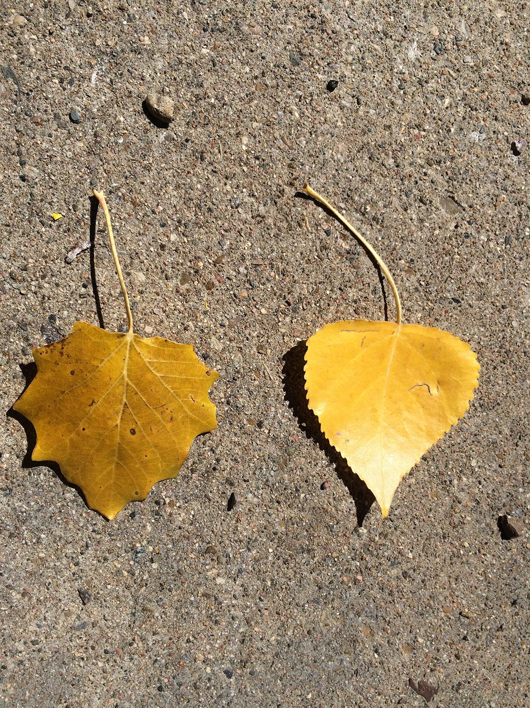 fall_guys